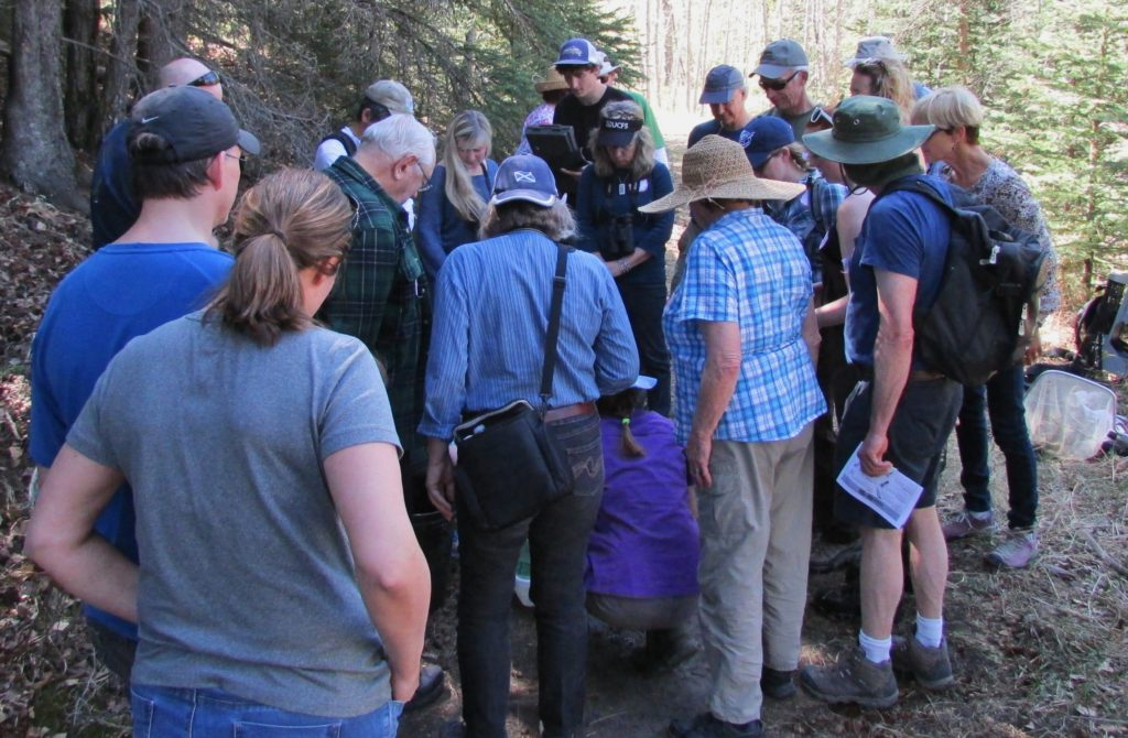 Participants of the first Bighill Creek Preservation Society forum hear a presentation during a walk by the creek. Photo: Courtesy Gerry Bietz.