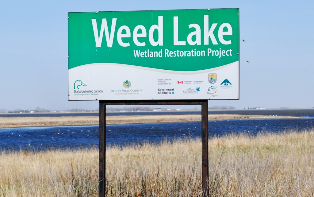 Weed Lake, a shallow water body just beside Langdon, receives stormwater and treated effluent from the hamlet as well as Conrich and Balzac. Photo: County News archive.